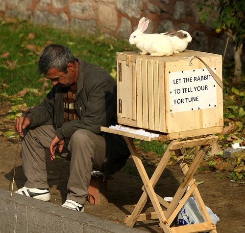 Fortune telling rabbit in Istanbul. Copyright Frank K.